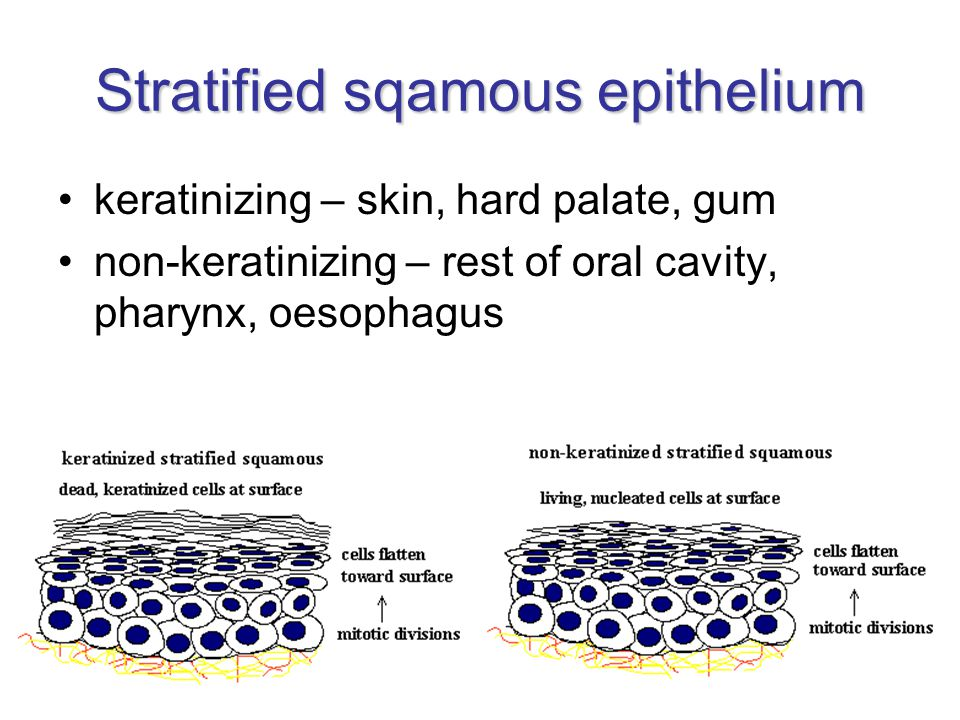 Stratified sqamous epithelium