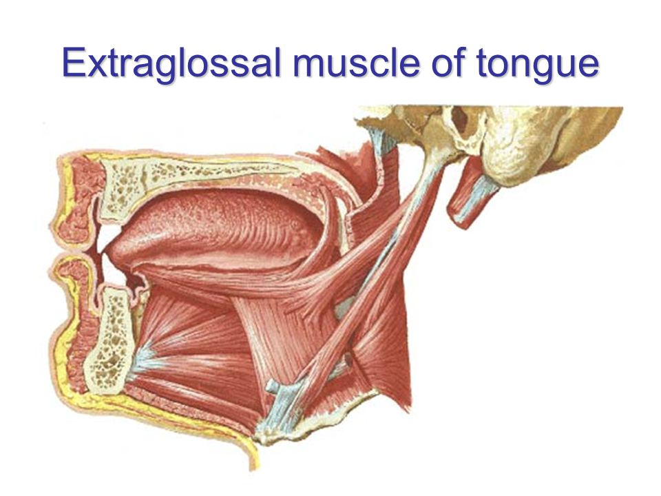 Extraglossal muscle of tongue