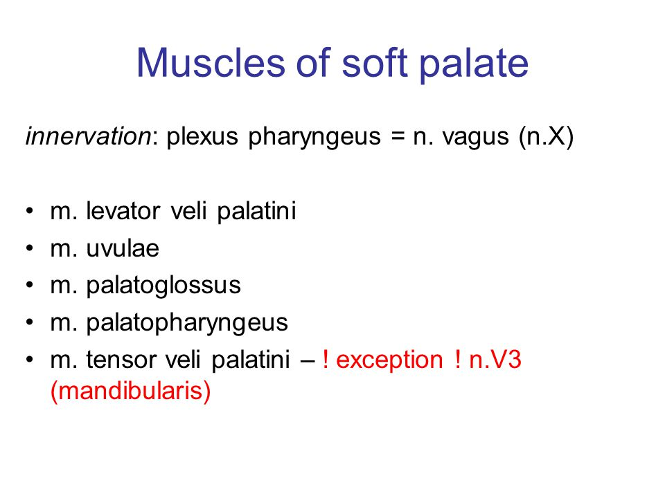 Muscles of soft palate innervation: plexus pharyngeus = n. vagus (n.X)