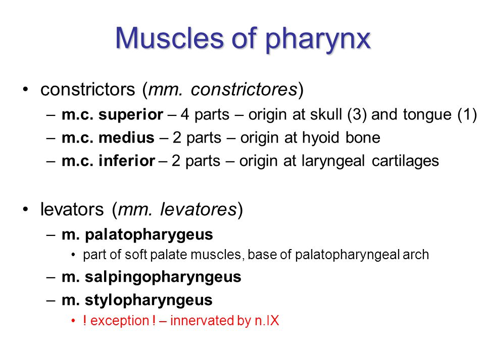 Muscles of pharynx constrictors (mm. constrictores)