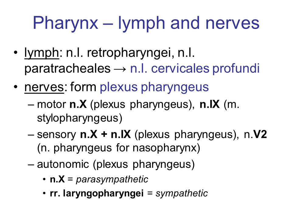 Pharynx – lymph and nerves