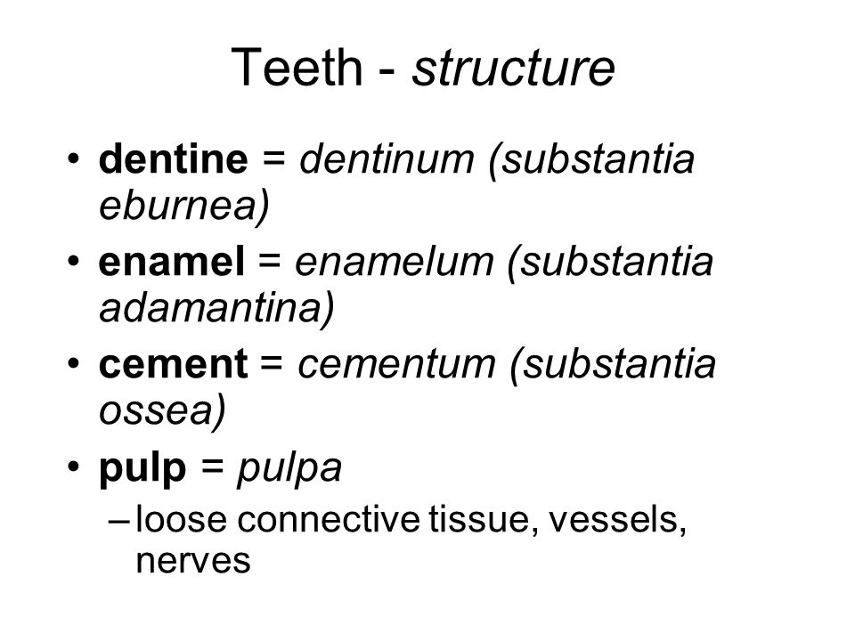 Teeth - structure dentine = dentinum (substantia eburnea)