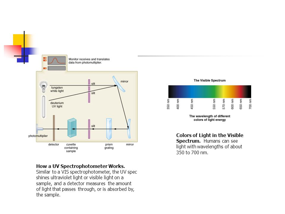 Colors of Light in the Visible Spectrum