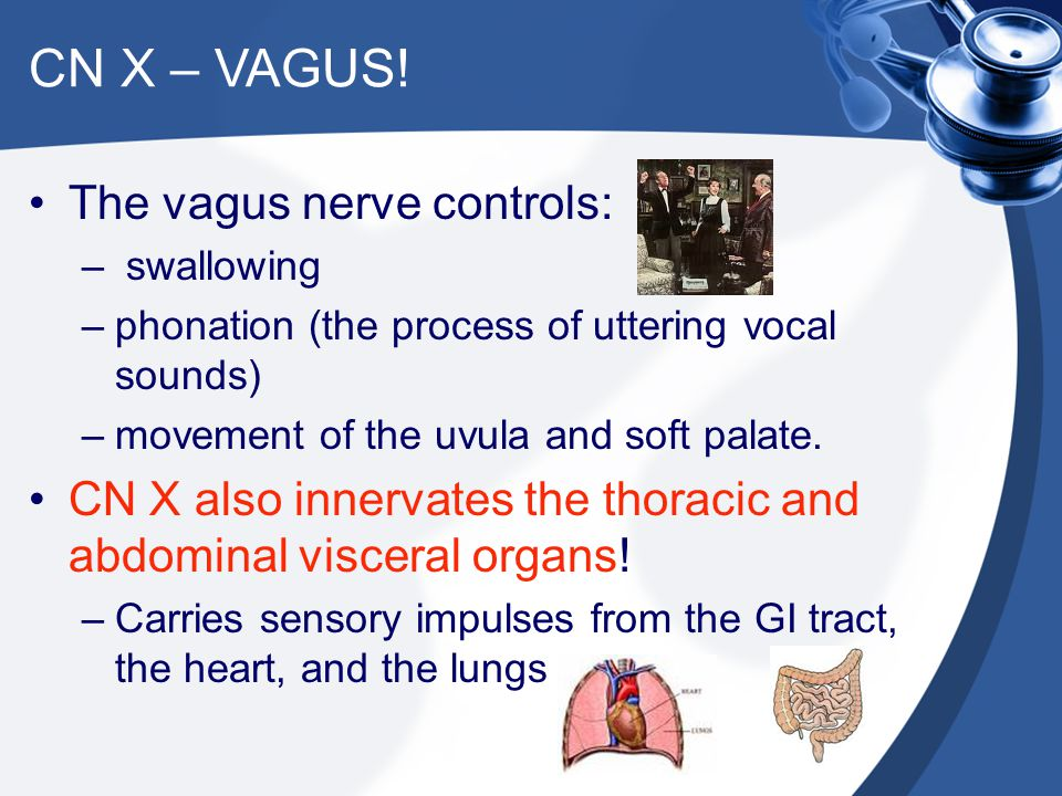 CN X – VAGUS! The vagus nerve controls: