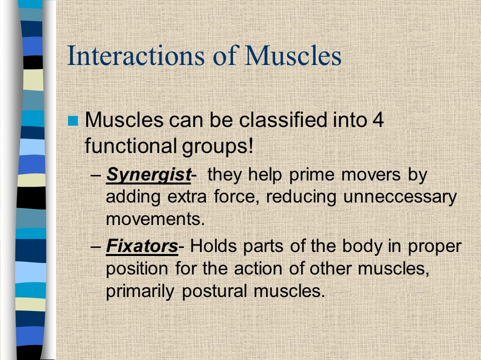 Interactions of Muscles