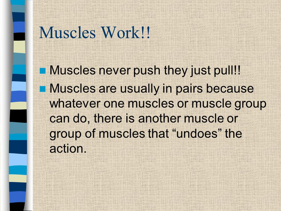 Muscles Work!! Muscles never push they just pull!!