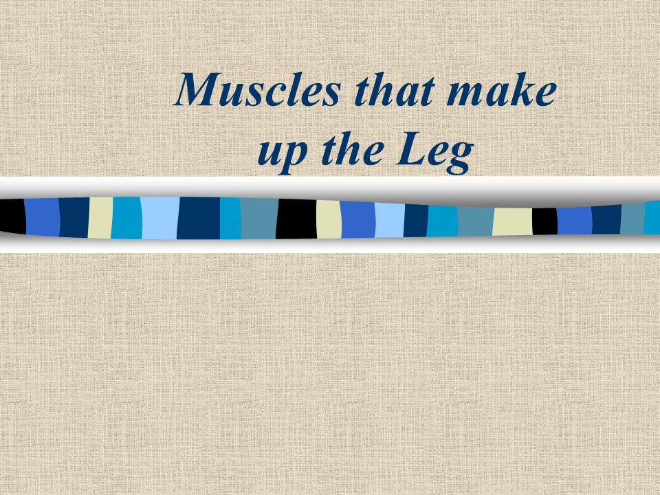 Muscles that make up the Leg