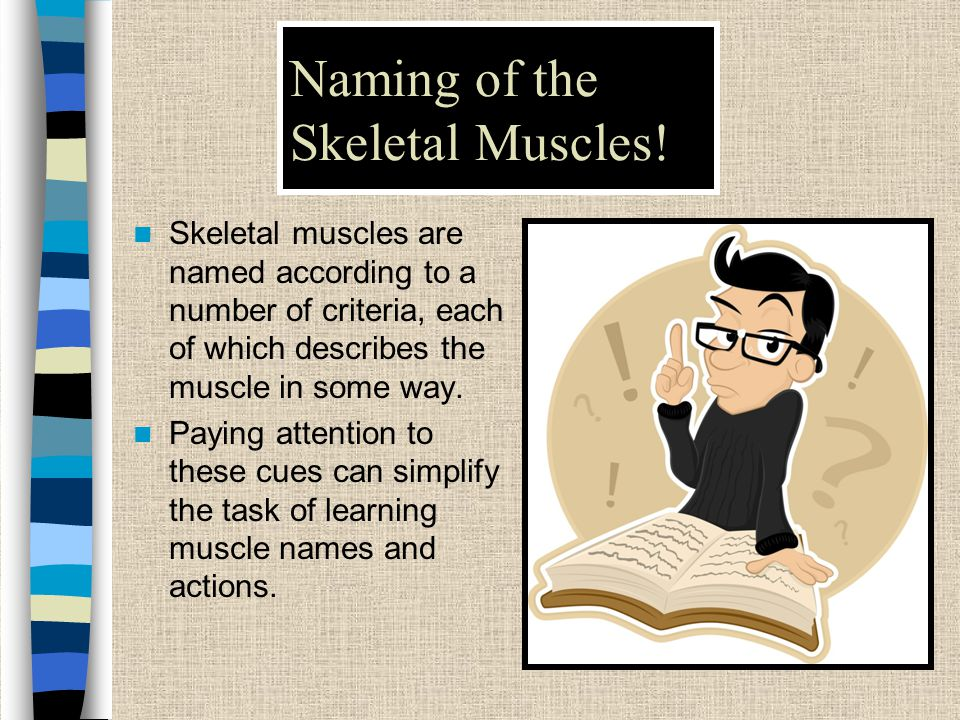 Naming of the Skeletal Muscles!