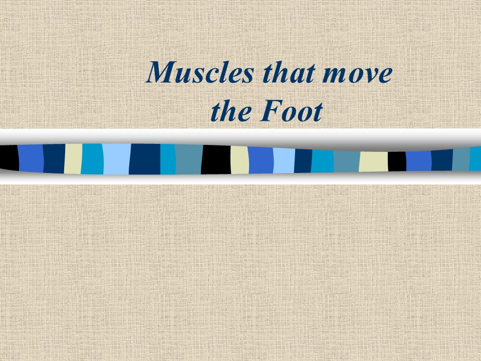 Muscles that move the Foot