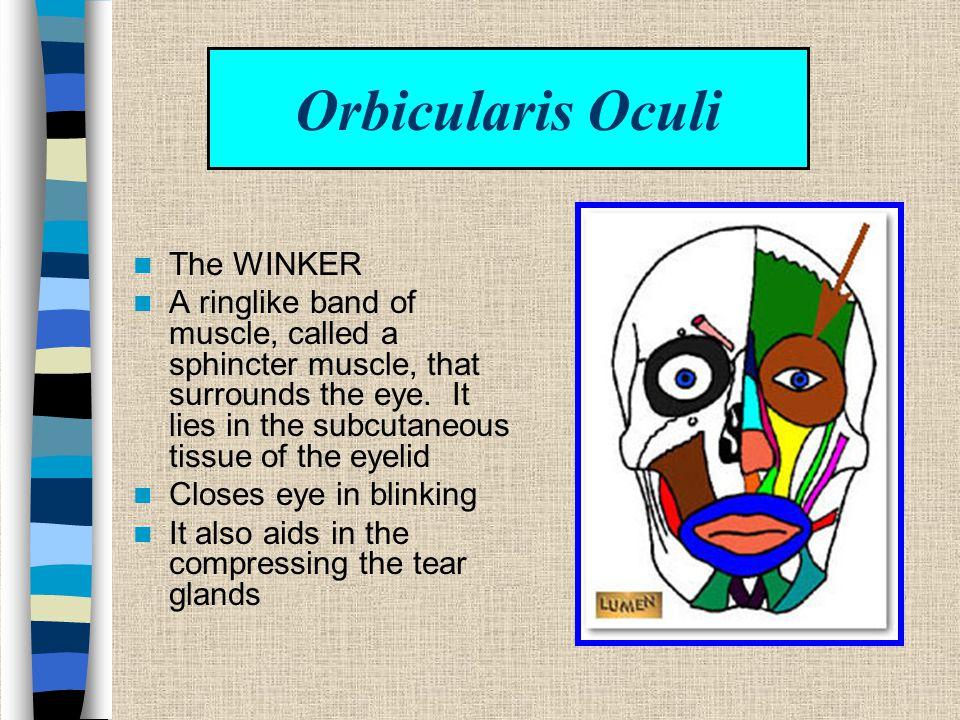 Orbicularis Oculi The WINKER
