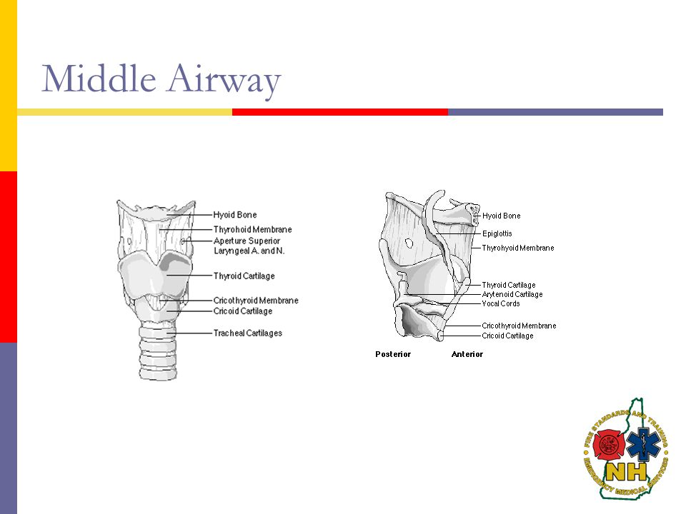 Middle Airway Middle Airway