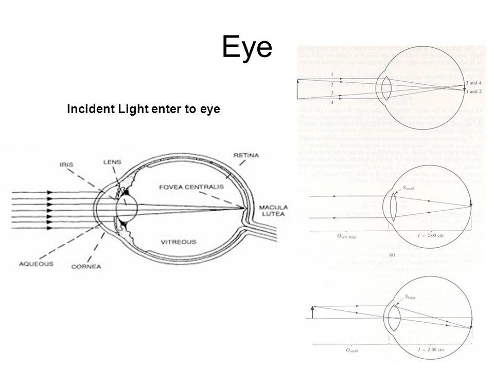 Eye Incident Light enter to eye