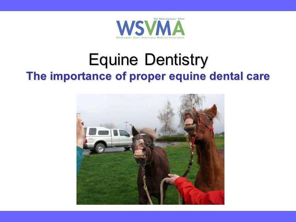 Equine Dentistry The importance of proper equine dental care