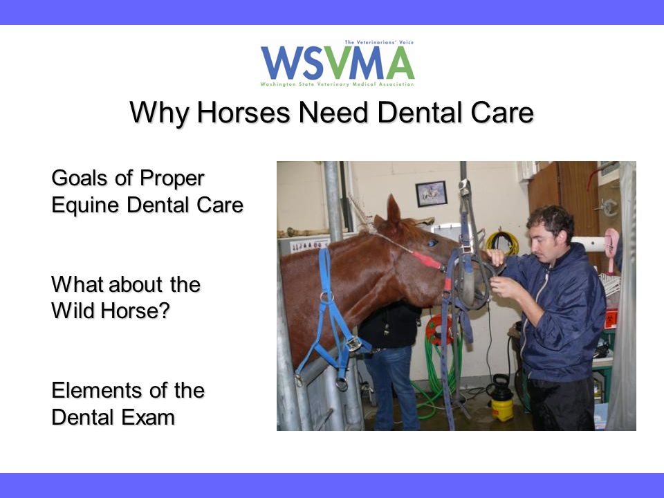 Why Horses Need Dental Care