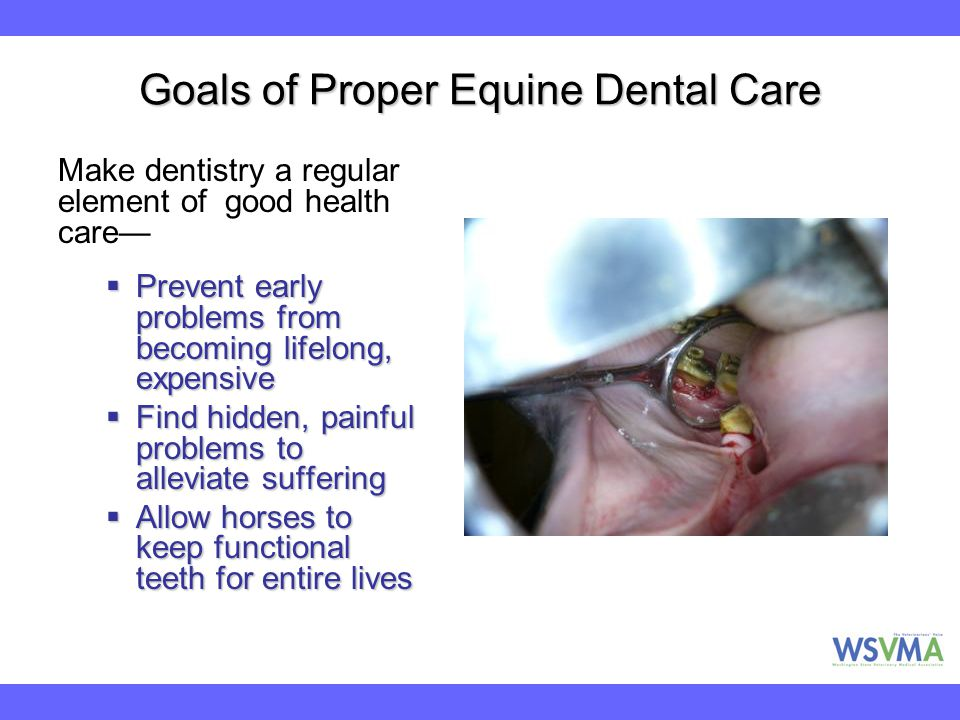 Goals of Proper Equine Dental Care