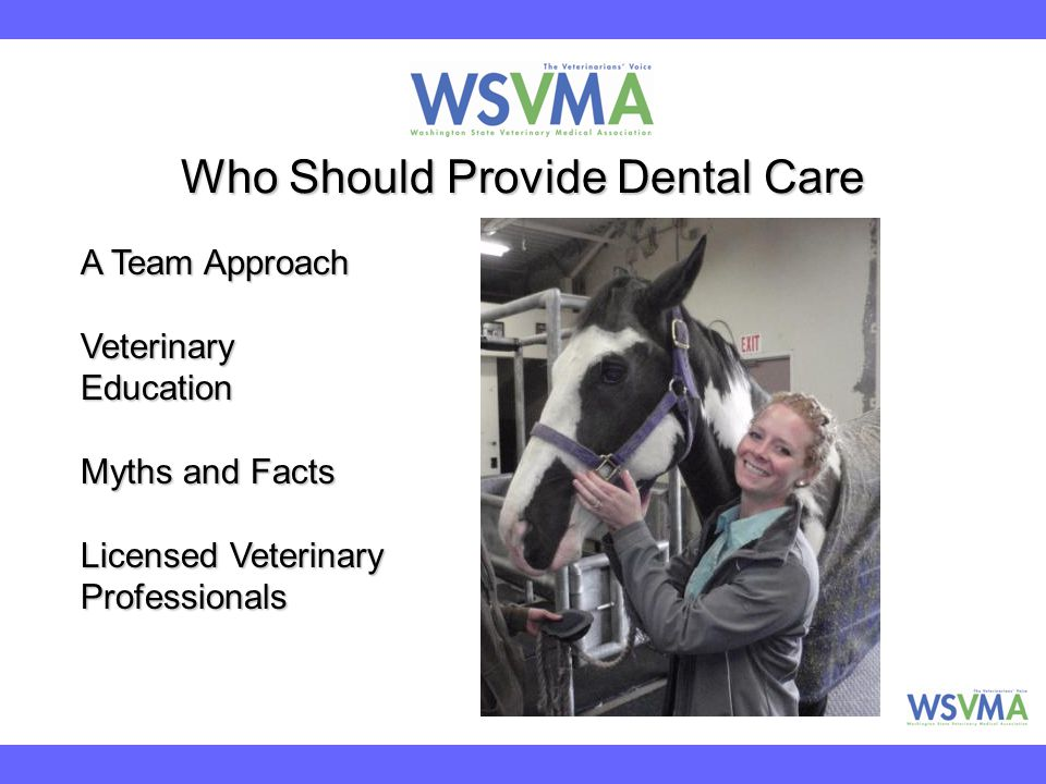Who Should Provide Dental Care