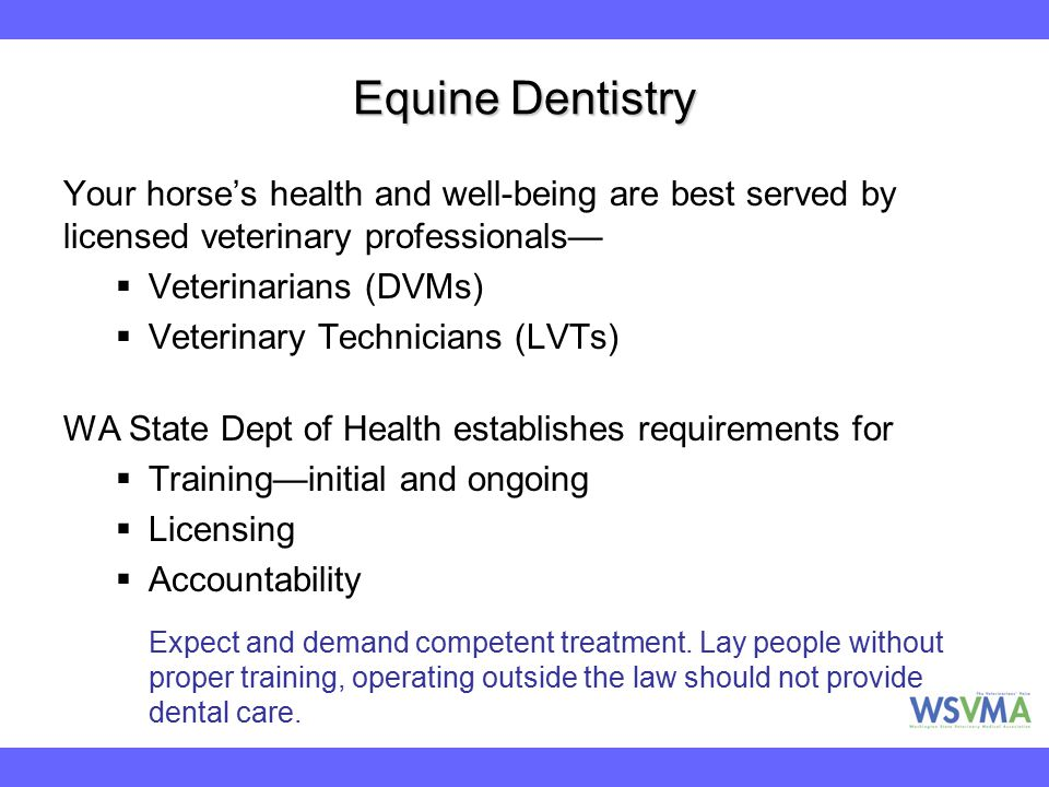 Equine Dentistry Your horse's health and well-being are best served by licensed veterinary professionals—