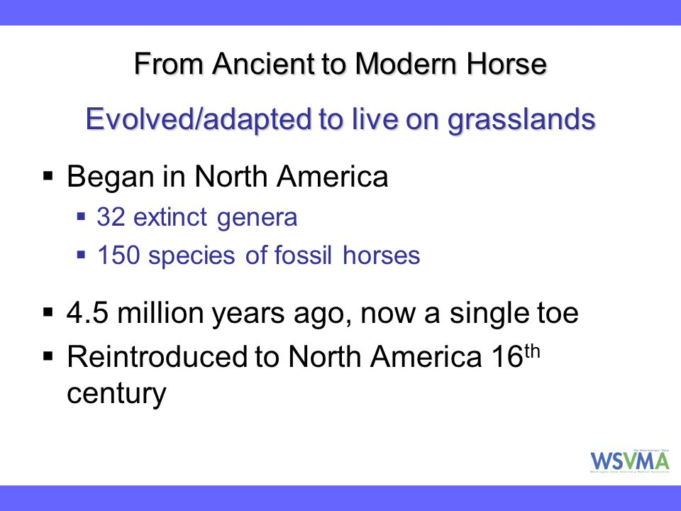 From Ancient to Modern Horse