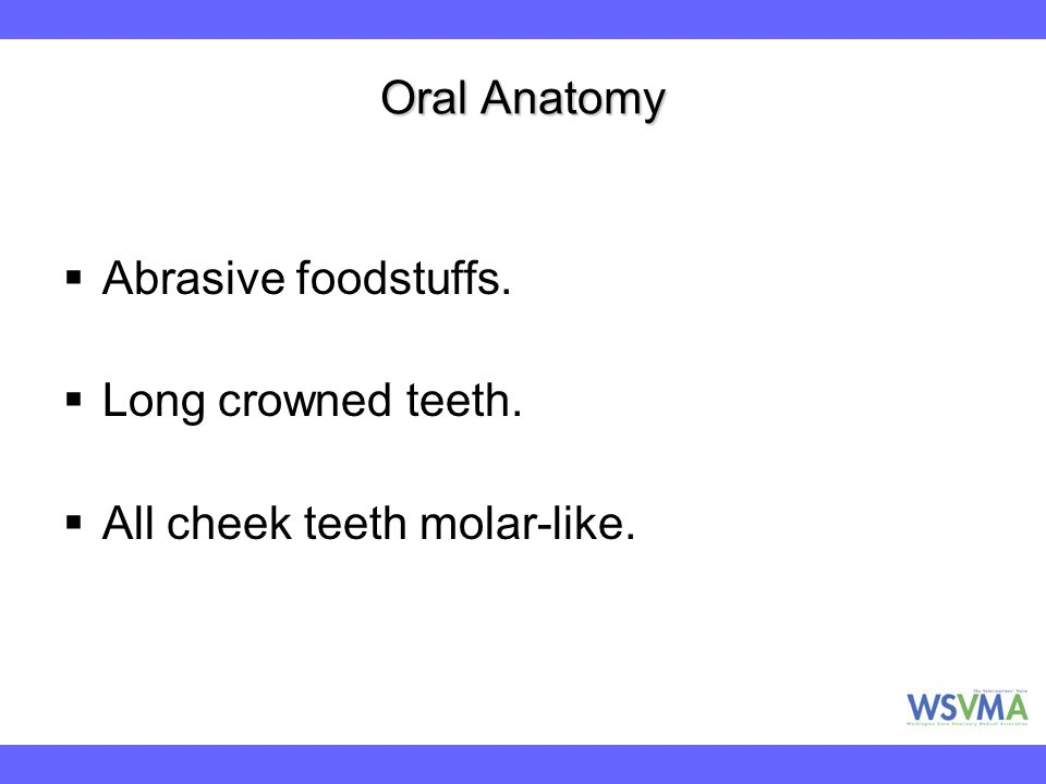 Oral Anatomy Abrasive foodstuffs. Long crowned teeth. All cheek teeth molar-like.