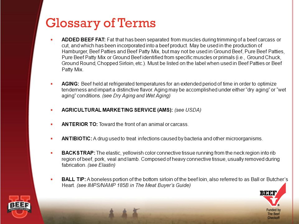 Glossary of Terms