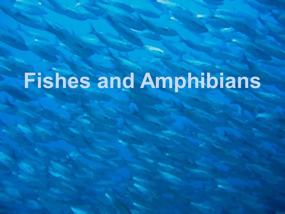 Fishes and Amphibians