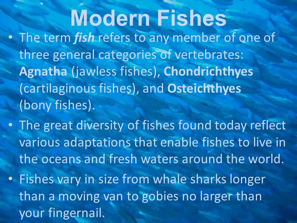 Modern Fishes