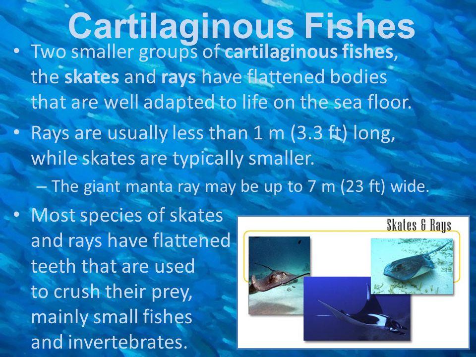 Cartilaginous Fishes