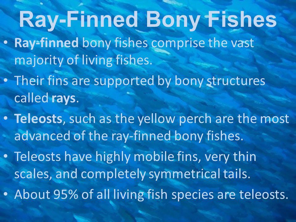 Ray-Finned Bony Fishes