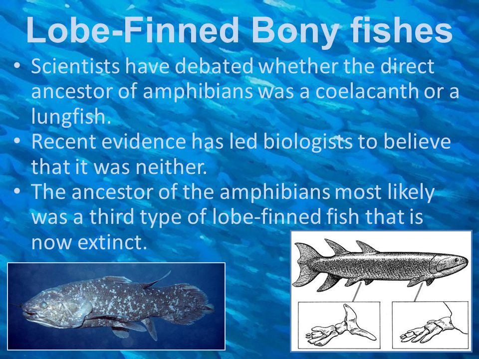 Lobe-Finned Bony fishes