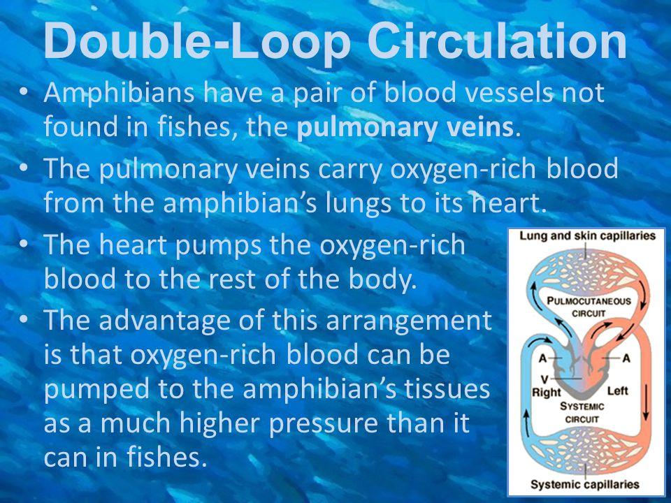 Double-Loop Circulation
