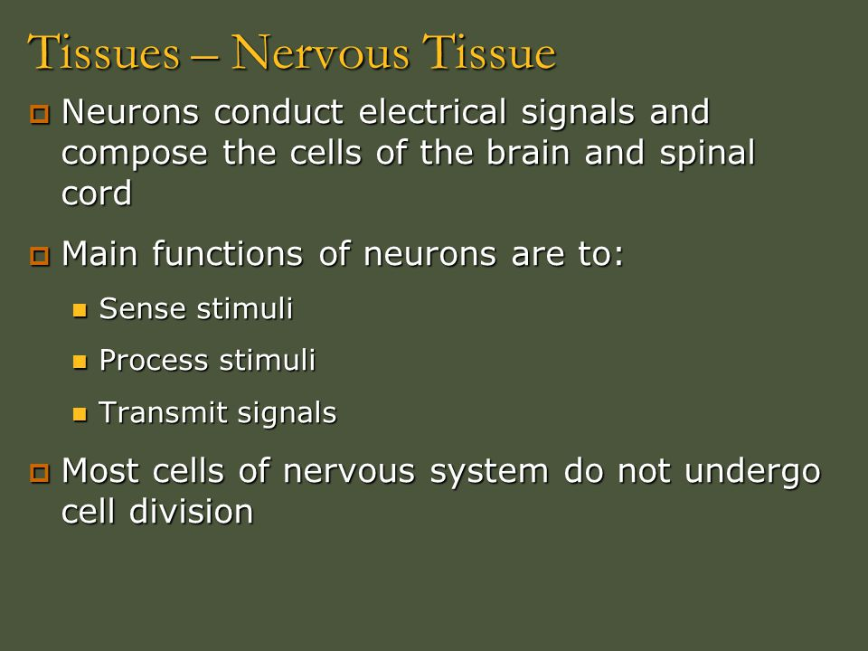 Tissues – Nervous Tissue