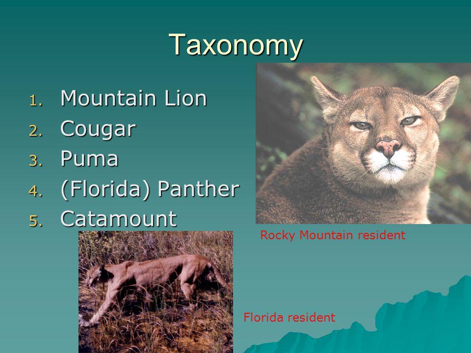 Taxonomy Mountain Lion Cougar Puma (Florida) Panther Catamount