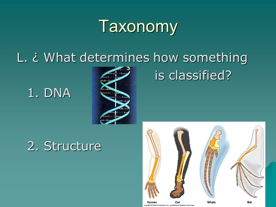 Taxonomy L. ¿ What determines how something is classified 1. DNA