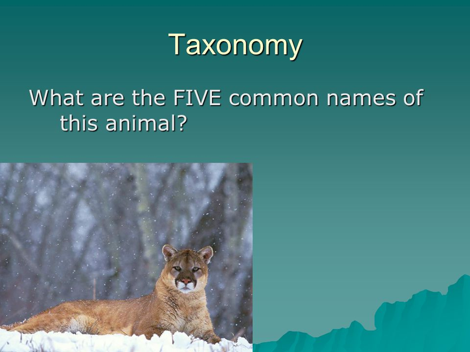 Taxonomy What are the FIVE common names of this animal