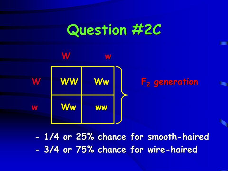 Question #2C W w W WW Ww F2 generation w Ww ww