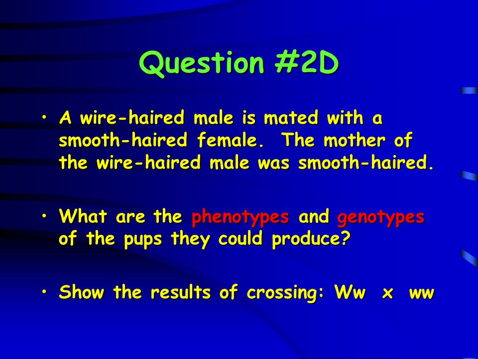 Question #2D A wire-haired male is mated with a smooth-haired female. The mother of the wire-haired male was smooth-haired.