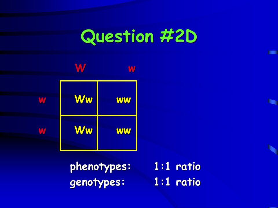 Question #2D W w w Ww ww phenotypes: 1:1 ratio genotypes: 1:1 ratio