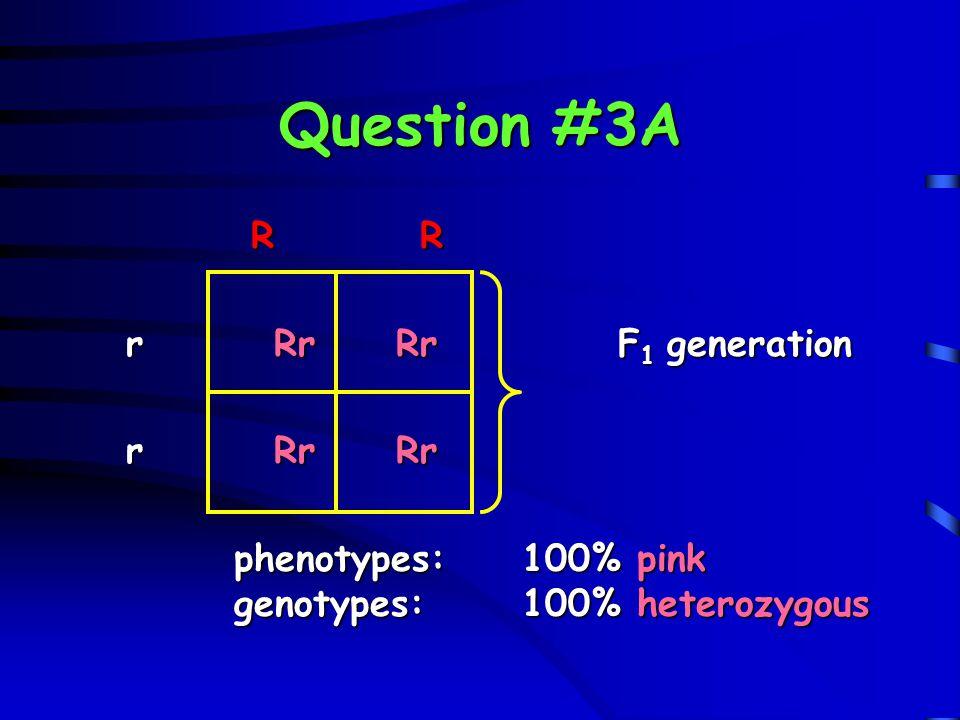 Question #3A R R r Rr Rr F1 generation r Rr Rr