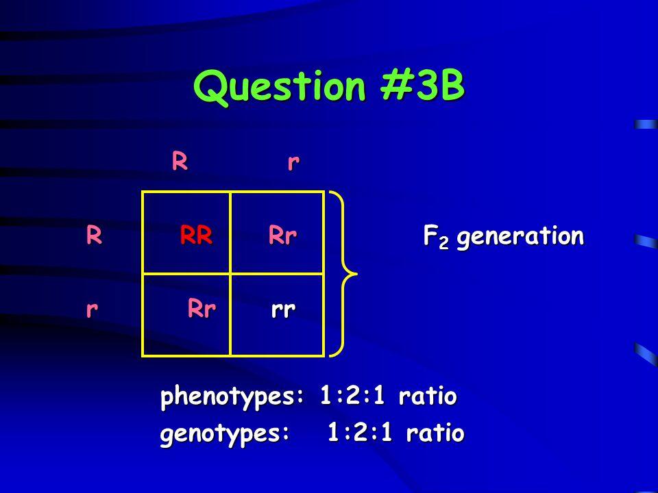 Question #3B R r R RR Rr F2 generation r Rr rr phenotypes: 1:2:1 ratio