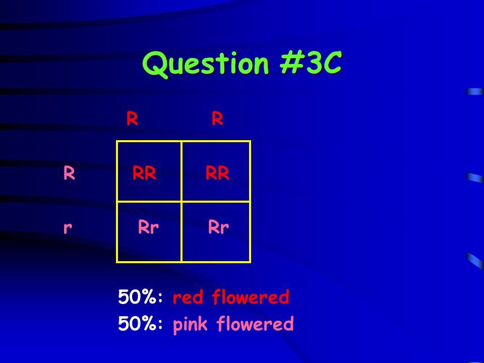 Question #3C R R. R RR RR. r Rr Rr.