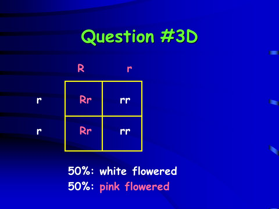 Question #3D R r r Rr rr 50%: white flowered 50%: pink flowered