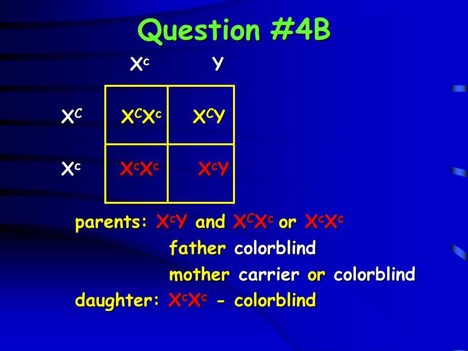 Question #4B Xc Y XC XCXc XCY Xc XcXc XcY