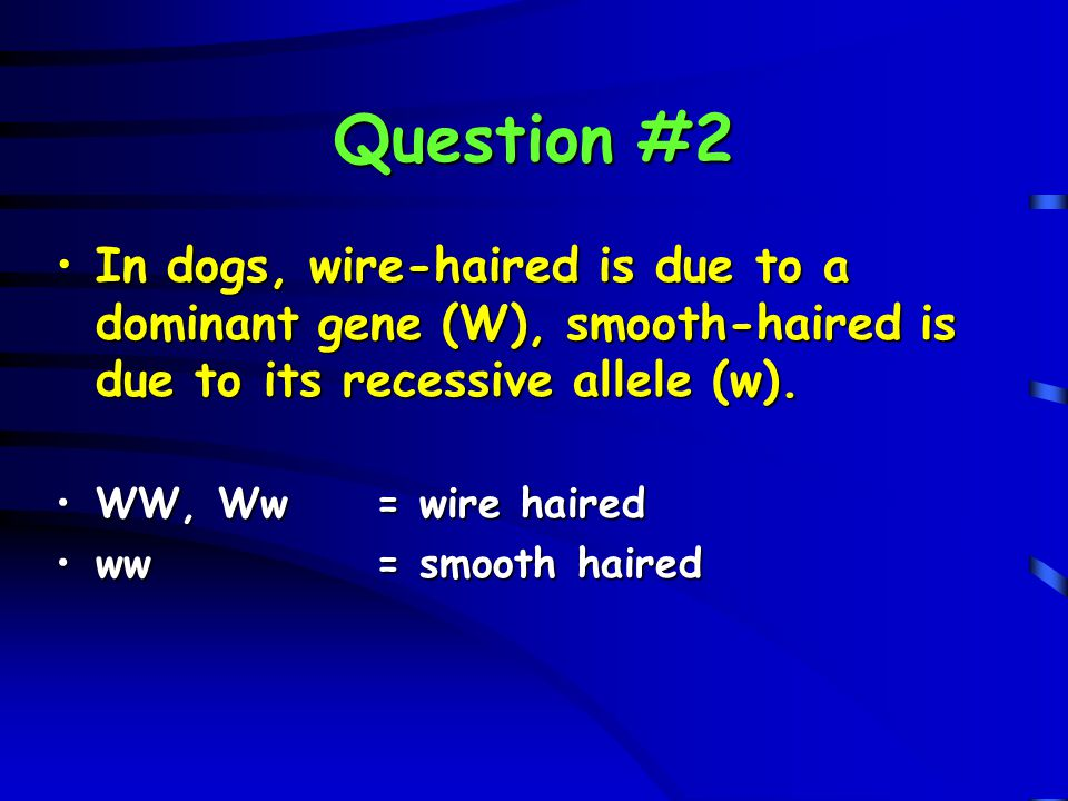 Question #2 In dogs, wire-haired is due to a dominant gene (W), smooth-haired is due to its recessive allele (w).