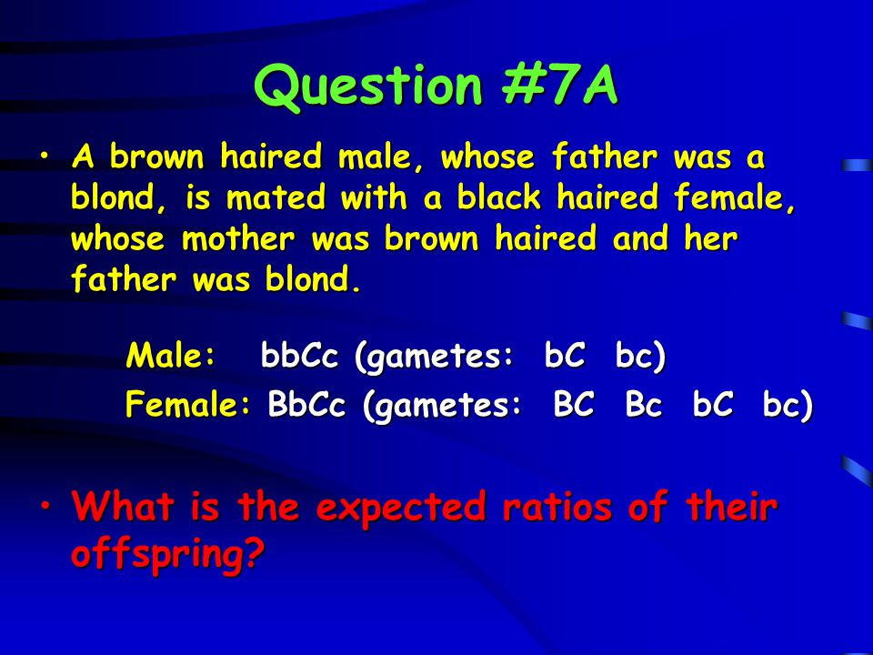 Question #7A What is the expected ratios of their offspring