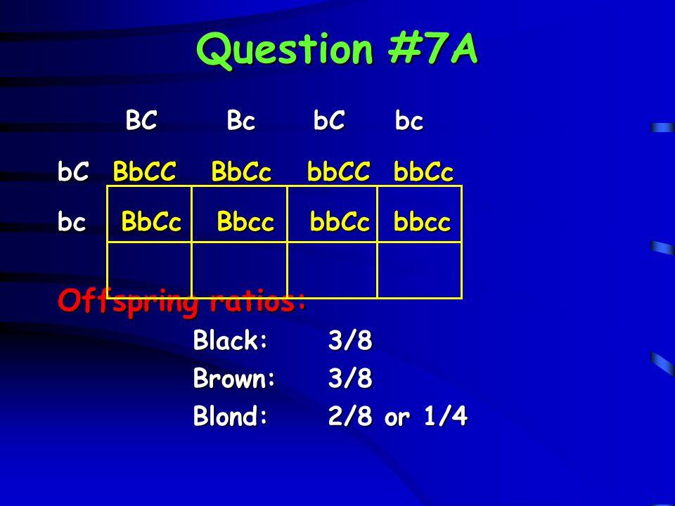 Question #7A Offspring ratios: BC Bc bC bc bC BbCC BbCc bbCC bbCc
