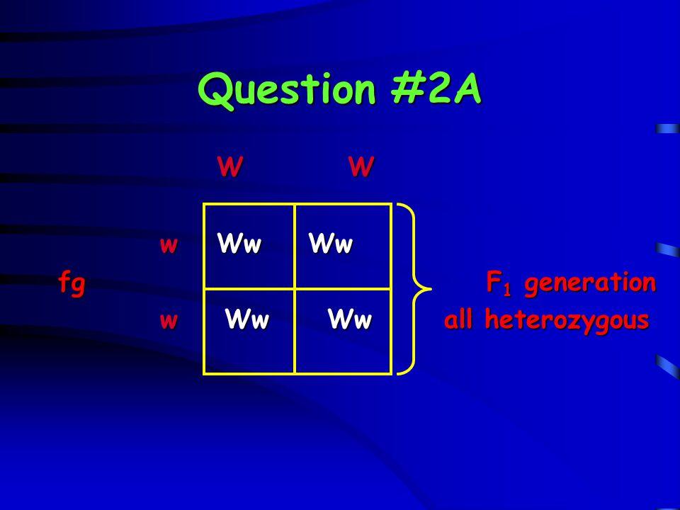 Question #2A W W. w Ww Ww. fg F1 generation.