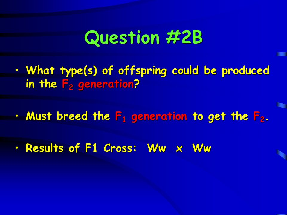 Question #2B What type(s) of offspring could be produced in the F2 generation Must breed the F1 generation to get the F2.