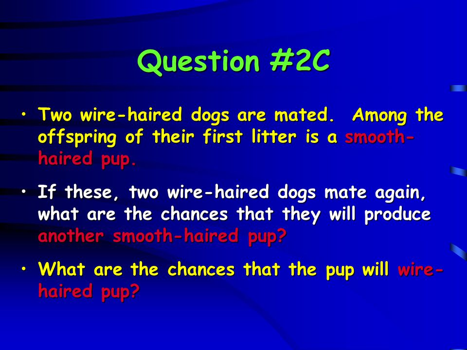 Question #2C Two wire-haired dogs are mated. Among the offspring of their first litter is a smooth-haired pup.