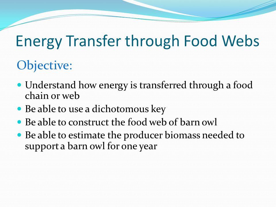 Energy Transfer through Food Webs