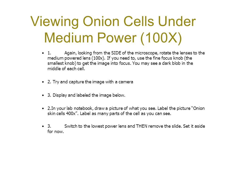 Onion Cell Under Microscope 100x